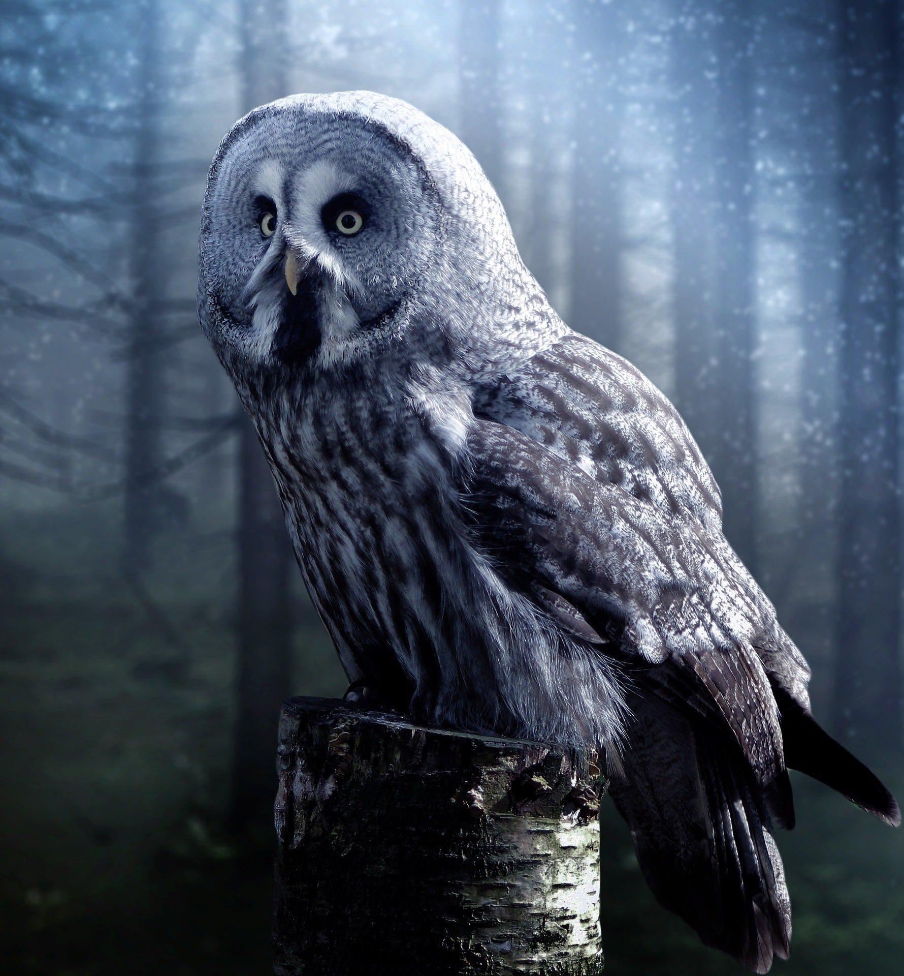 2bU - Owls