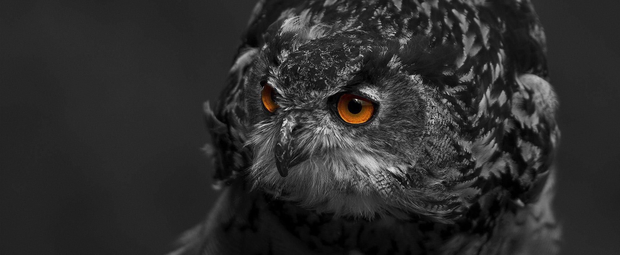 2bu Owl